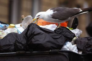 Litter issue escalates in the streets of Edinburgh. Credit: Getty Images